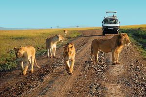 game-drive-at-tsavo-east-national-park