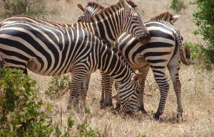 Tsavo_East_National_Park_003