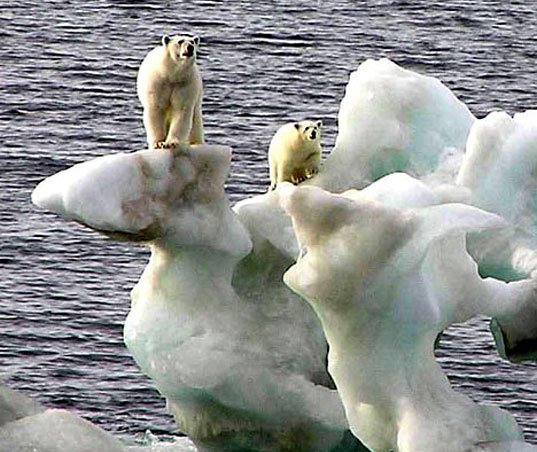 polarbearsinking