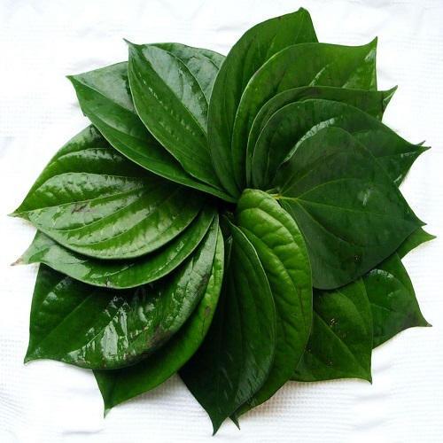betel-leaves-500x500.jpg